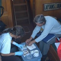 Processing humpback whale biopsy samples.