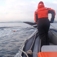 Researcher attempting to tag a humpback whale